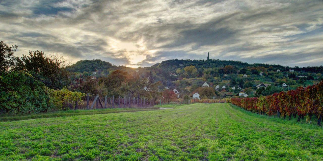 Explore the little sister of Somló – Ság Hill