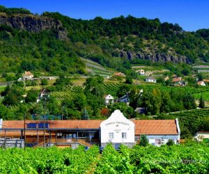 Wine tasting and tour of Tornai Winery